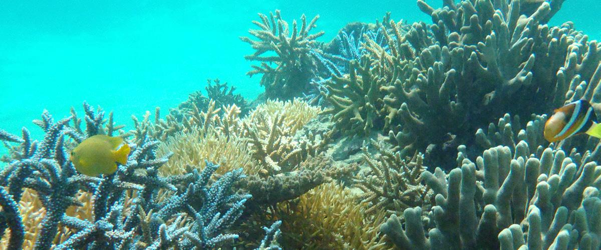 沖縄県白保 サンゴの海
