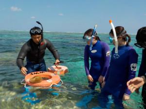 クサビライシ科のサンゴを観察する学生さんとスタッフ